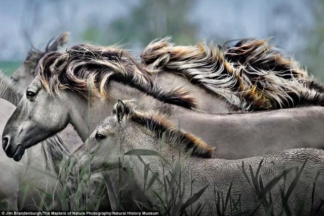 wildlife (3)