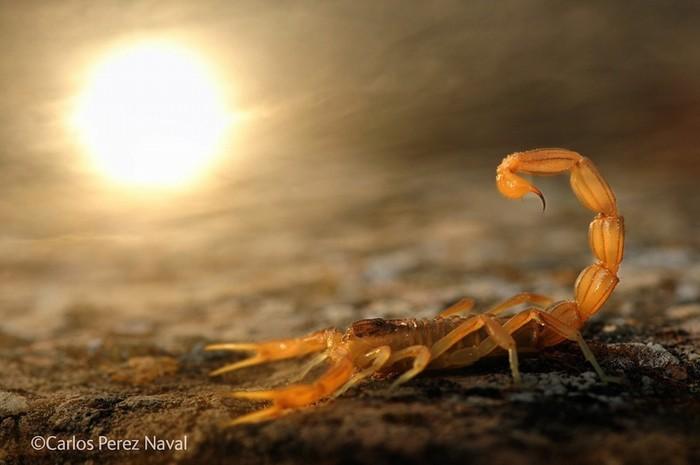"""Fotografia castigatoare: """"Stinger in the sun"""""""